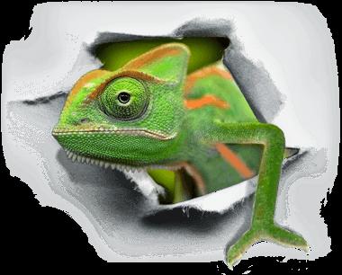 Chameleon WebPrezent